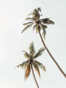 Palm Photo by Tanya Shumkina
