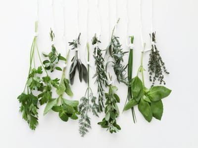 Various Fresh Herbs Hanging Up by Tanya Zouev