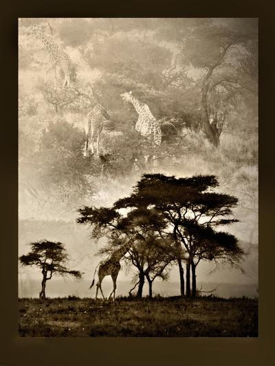 Tanzanian Landscape-Bobbie Goodrich-Premium Giclee Print