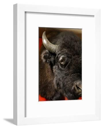 Taos, New Mexico, USA.-Julien McRoberts-Framed Photographic Print