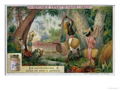 "Tapping Rubber Trees, Promotional Advertising Card for ""Veritable Extrait De Viande Liebig""--Giclee Print"