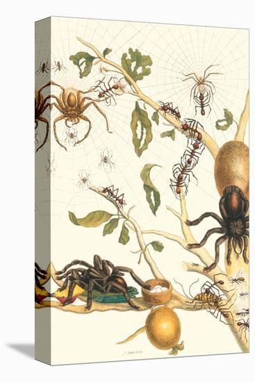 Tarantulas and Army Ants-Maria Sibylla Merian-Stretched Canvas Print