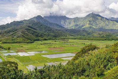 Taro Fields in Hanalei National Wildlife Refuge-Michael DeFreitas-Photographic Print