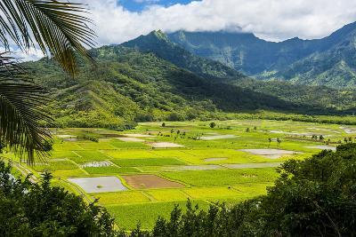 Taro Fields Near Hanalei on the Island of Kauai, Hawaii, United States of America, Pacific-Michael Runkel-Photographic Print