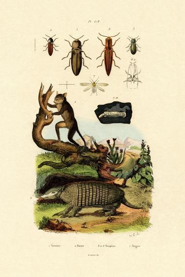 Tarsier, 1833-39--Giclee Print