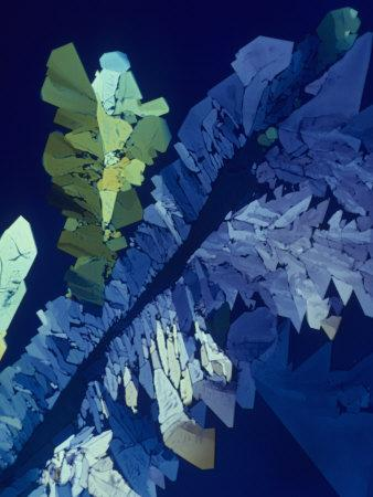 Tartaric Acid Crystals Viewed with Polarized Light-George Musil-Photographic Print