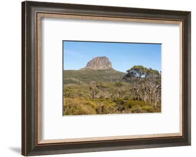Tasmania, Cradle Mountain-Lake St Clair NP. Morning light on Barn Bluff and eucalyptus forest-Trish Drury-Framed Photographic Print