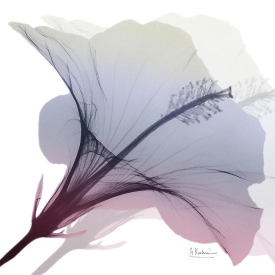 Tasty Grape Hibiscus 2-Albert Koetsier-Art Print