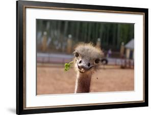 Funny positive smiling ostrich with green grass in its nib. The head of the big bird peeping out by Tatiana Andrianova