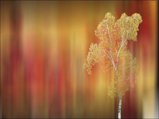 tatiana-lopatina-floral-silhouette