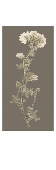 Taupe Nature Study I-Vision Studio-Art Print