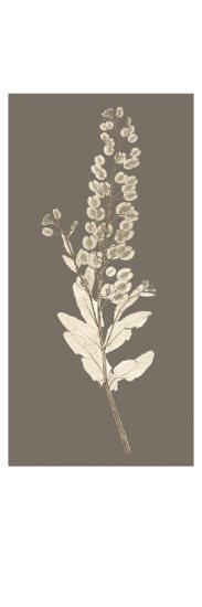 Taupe Nature Study III-Vision Studio-Art Print