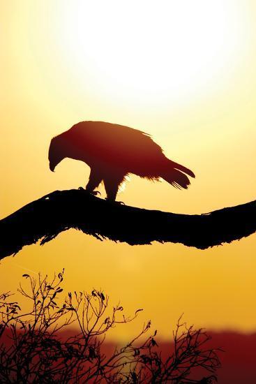 Tawny Sunrise-Susann Parker-Photographic Print