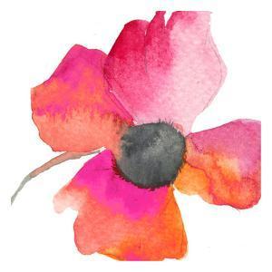 Poppy by Taylor Greene