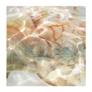 Shell Abstract 1 by Taylor Greene