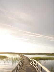 A Boardwalk on a Bright Clear Day, Prince Edward Island National Park, Canada by Taylor S^ Kennedy
