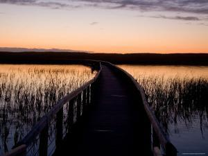 A Pathway Goes Through a Wetlands in the Park, Prince Edward Island National Park, Canada by Taylor S^ Kennedy