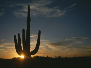 A Saguaro Cactus Silhouetted by the Sunset by Taylor S^ Kennedy