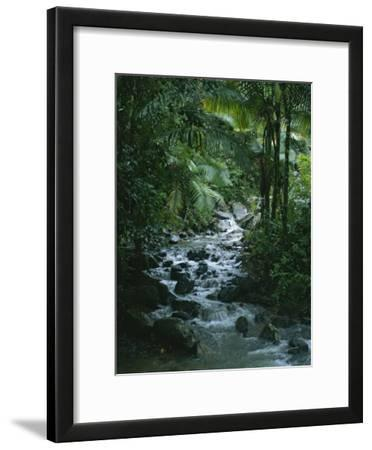 A View of a Tropical Stream in El Yunque, Puerto Rico