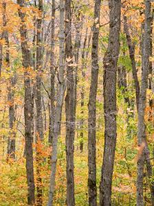 A View of Trees in a Forest on an Autumn Day by Taylor S. Kennedy
