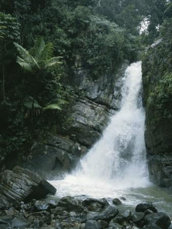 A Waterfall in the Tropical Rainforest El Yunque Park in Puerto Rico