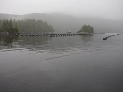 Oyster Farm in a Calm Inlet of Clayoquot Sound by Taylor S. Kennedy