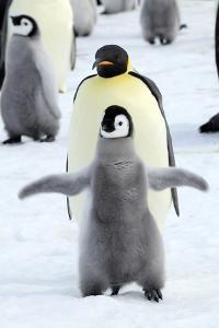 Dancing Penguin by TCYuen