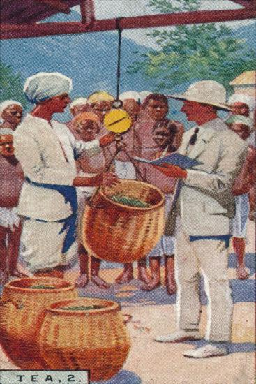 'Tea, 2. - Weighing the Pickings, Ceylon', 1928-Unknown-Giclee Print