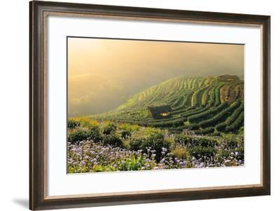 Tea Garden-Nutexzles-Framed Photographic Print