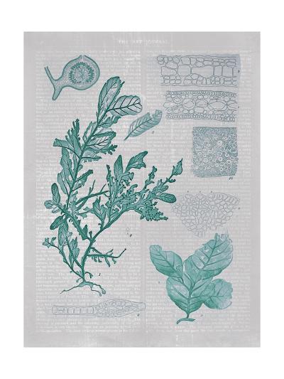 Teal Coral II-Jennifer Goldberger-Art Print