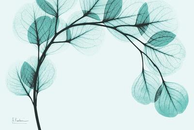https://imgc.artprintimages.com/img/print/teal-eucalyptus_u-l-pyjwoa0.jpg?p=0