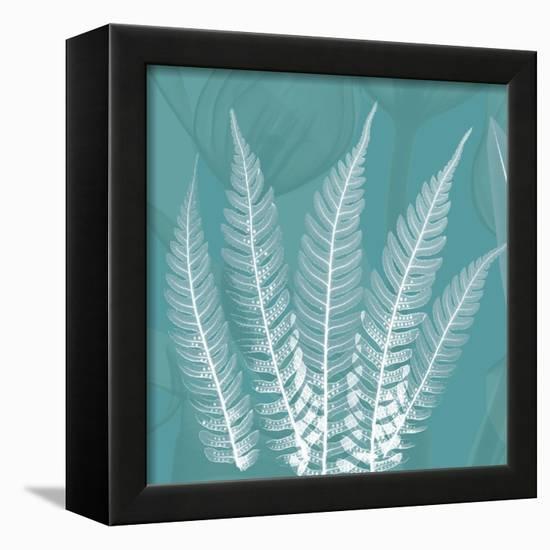 Teal Fern Xray-Albert Koetsier-Framed Stretched Canvas Print