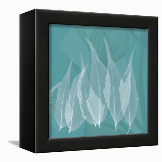 Teal Leaf Xray-Albert Koetsier-Framed Stretched Canvas Print