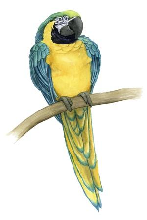 https://imgc.artprintimages.com/img/print/teal-macaw-ii_u-l-q1bp54a0.jpg?p=0