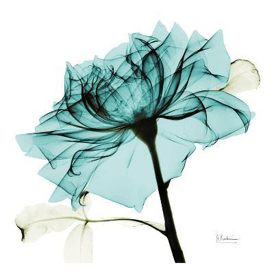 Teal Rose 2-Albert Koetsier-Art Print