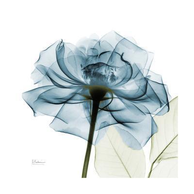https://imgc.artprintimages.com/img/print/teal-rose_u-l-q13fmt80.jpg?p=0