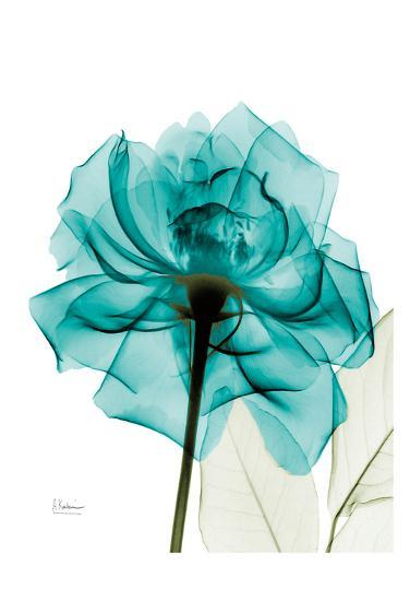 Teal Spirit Rose-Albert Koetsier-Art Print