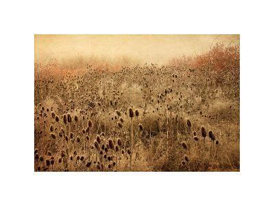 Teasel & Rosehips II-David Winston-Giclee Print