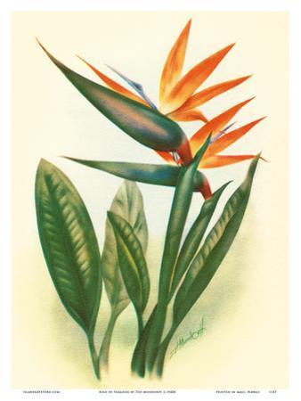 Bird of Paradise by Ted Mundorff