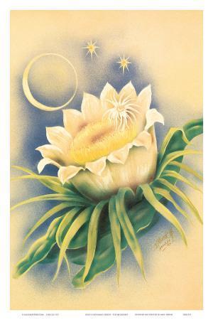 Hawaii Night Blooming Cereus, c. 1940s
