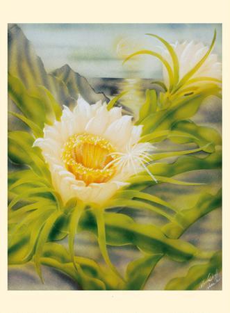 Hawaii Night Blooming Cereus (Hylocereus Undatus) - Honolulu Queen of the Night by Ted Mundorff
