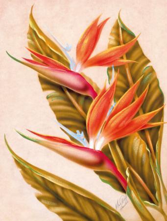 Hawaiian Bird of Paradise, c.1940s by Ted Mundorff