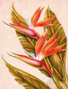 Hawaiian Bird of Paradise, c.1940s by Ted Mundorff