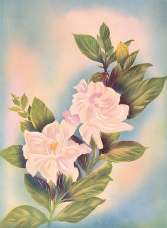 Hawaiian Gardenia (Nanu) by Ted Mundorff
