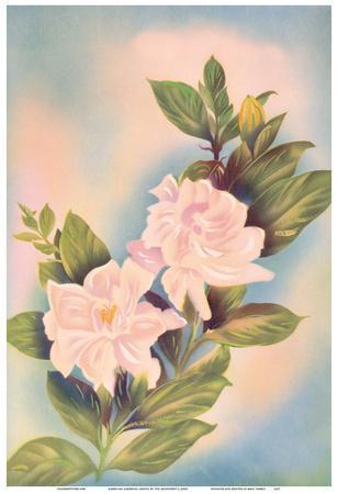 Hawaiian Gardenia (Nanu)