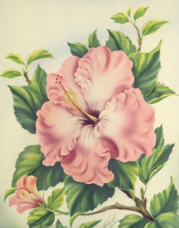 Hawaiian Pink Hibiscus, c.1940s by Ted Mundorff