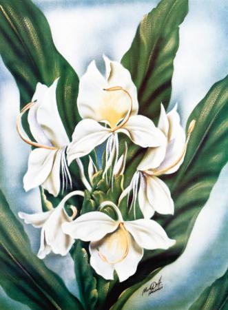 Hawaiian White Ginger, c.1940s by Ted Mundorff