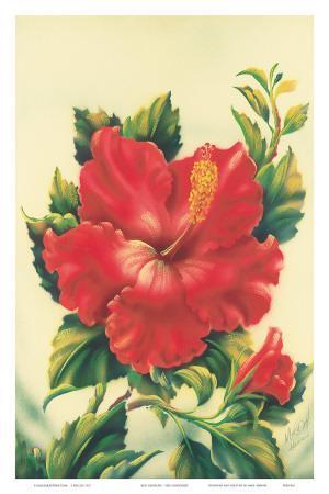 Red Hibiscus, Hawaiian Tropical Flower