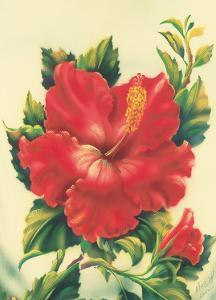Red Hibiscus, Hawaiian Tropical Flower by Ted Mundorff