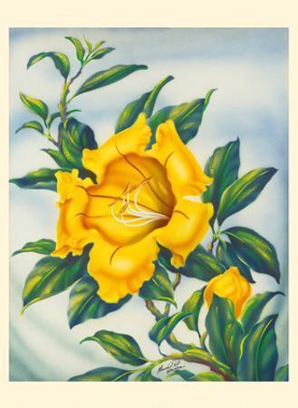 Yellow Hibiscus (Ma'o Hau Hele) - State Flower of Hawaii by Ted Mundorff